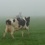 Cow boy (2011) 60x40 cm Afdruk op foto-folie met spansysteem   Directdruk op alu-dibond in andere formaten mogelijk